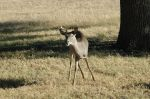Canyon_Lake_Deer_pics_Nov_2005_021.jpg