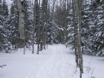 Trail thru Winter_s Woods.JPG